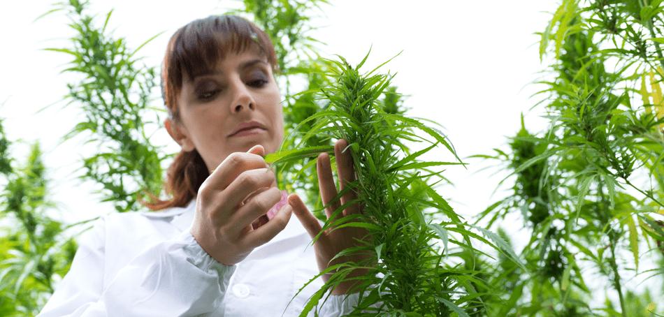 Medical Marijuana for Children - THC - CBD