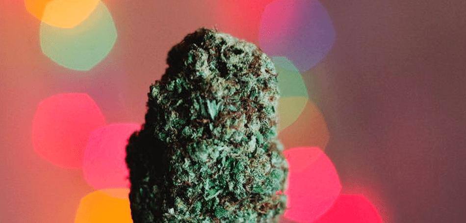 Opiates and Medical Marijuana