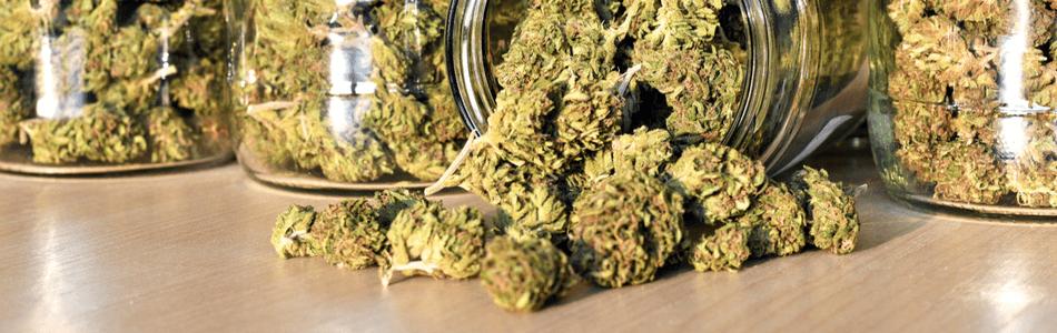 Marijuana Myth - Marijuana makes you stoned or high