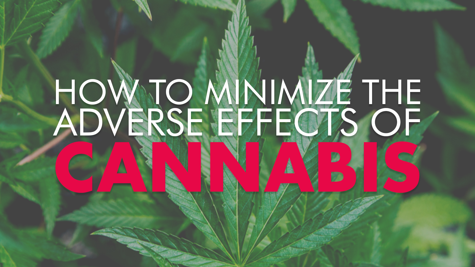 How to Minimize Adverse Effects of Cannabis