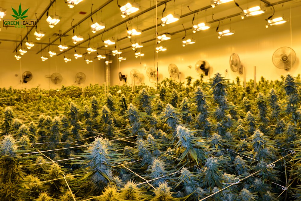 Buying cannabis in Oklahoma