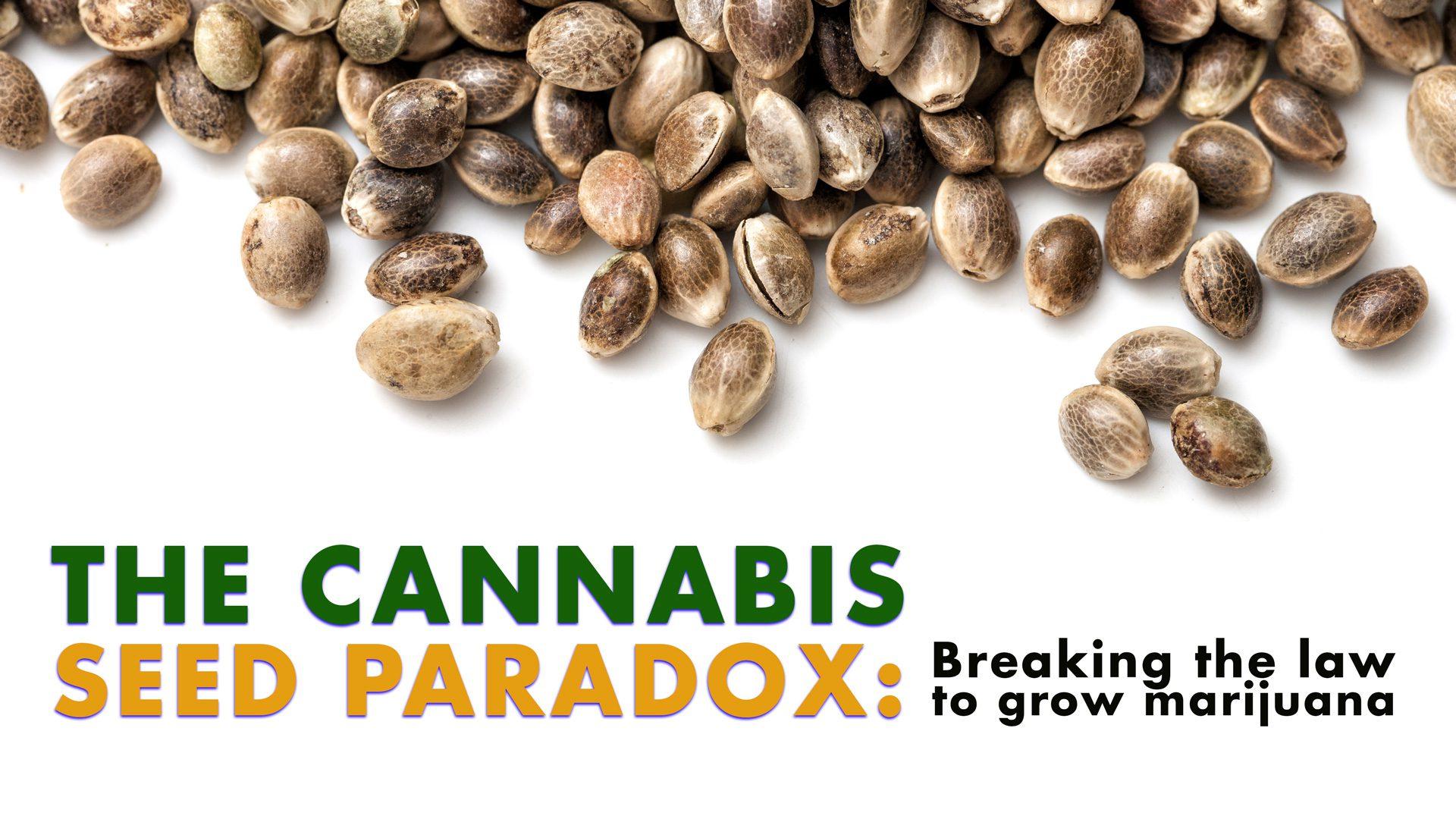 CannabisParadox
