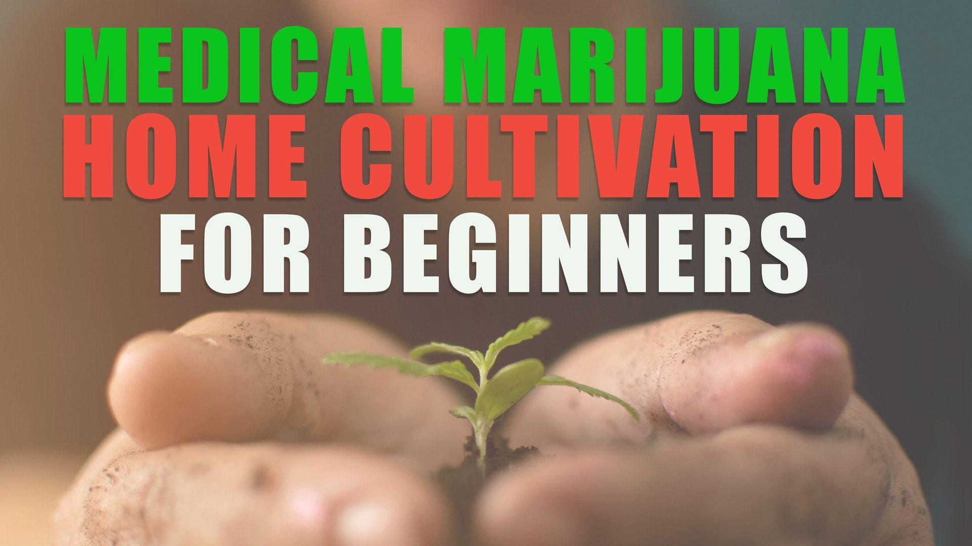 HomeCult_Cannabis1