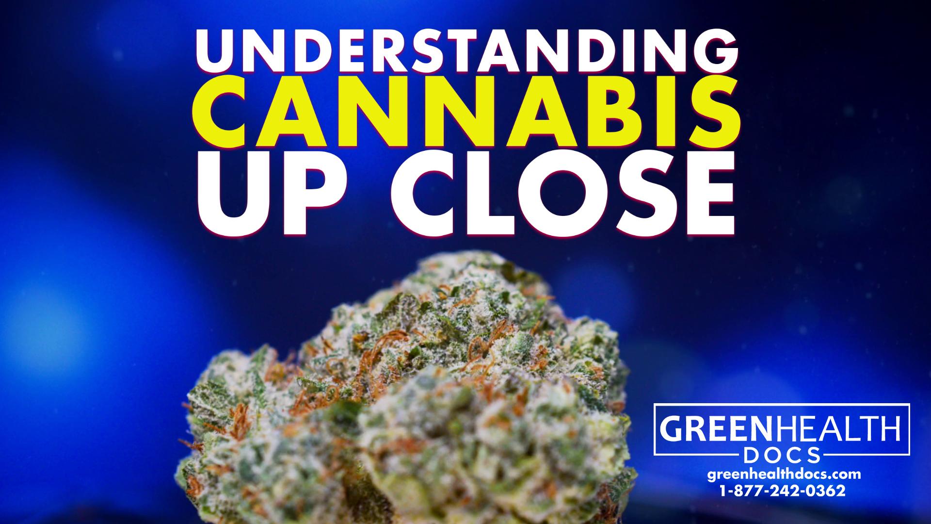 understanding cannabis up close
