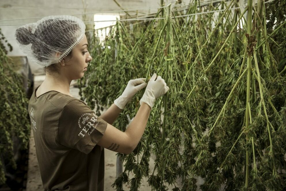 Arkansas Medical Marijuana Advocates Want More Cultivation Facilities