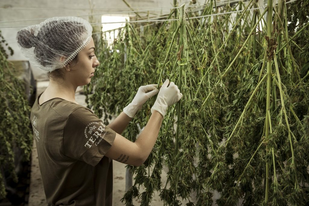 Arkansas Medical Marijuana Advocates Want More Cultivation Facilities