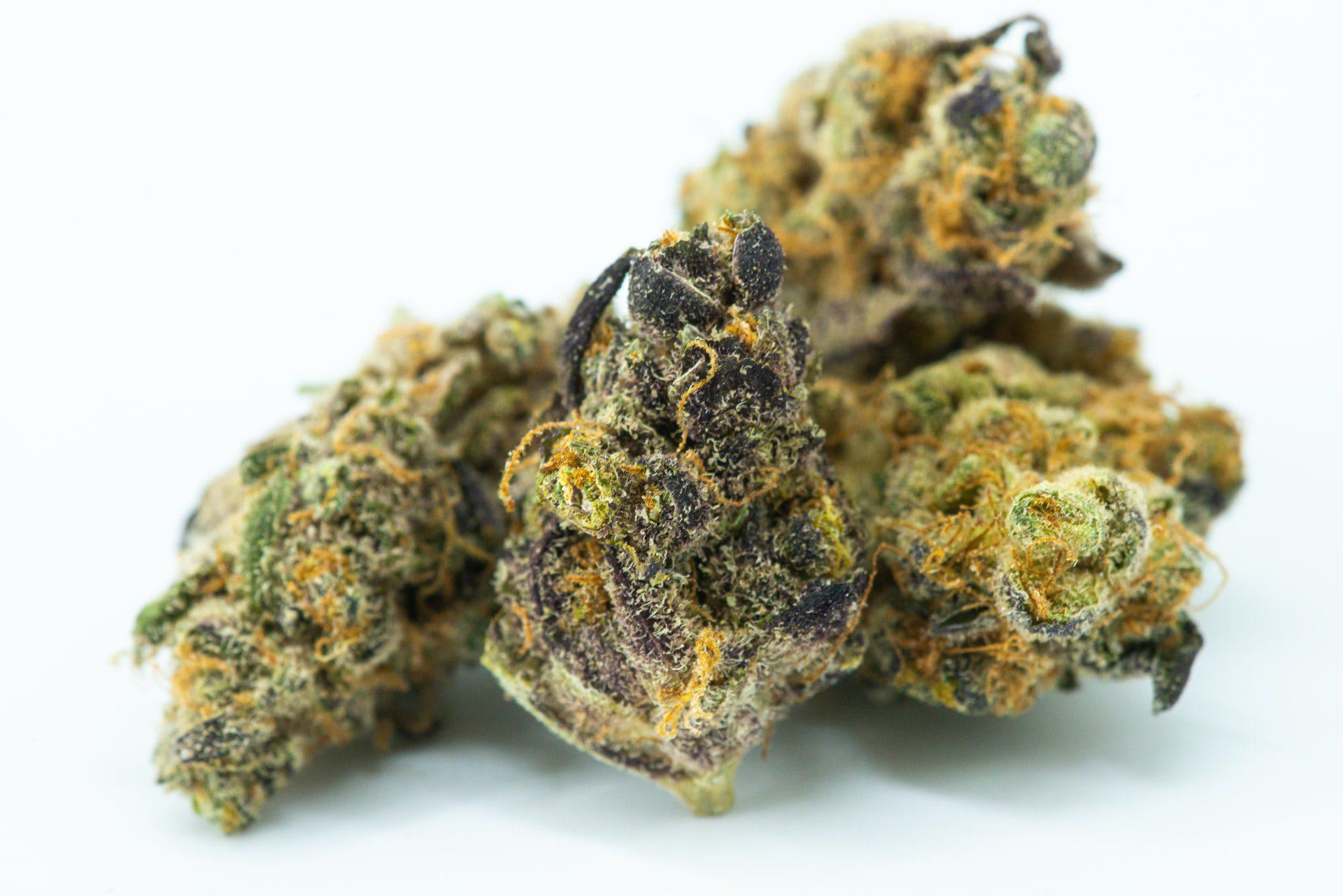 How to Rehydrate Marijuana to Perfection